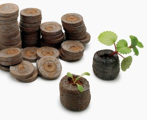 Peat pellets make a good starting medium for seeds or cuttings - expand in warm water, and use. However, peat contains little nutrient for plant growth: when this has started, be sure to fertilize appropriately. When the plant is large enough, bury the pellet, leaving the plant above ground