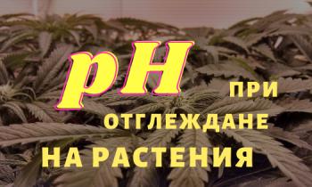 pH при отглеждане на растения хидропонно