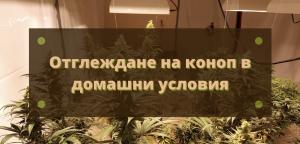 Отглеждане на марихуана вкъщи