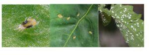 насекоми по растенията